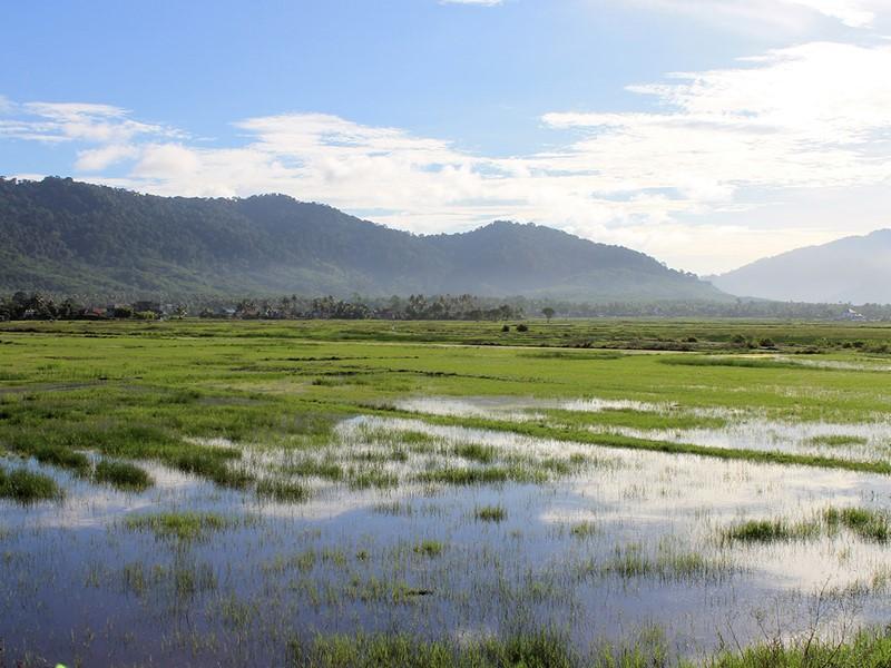 Rendez-vous au centre de l'île pour trouver de belles rizières apaisantes