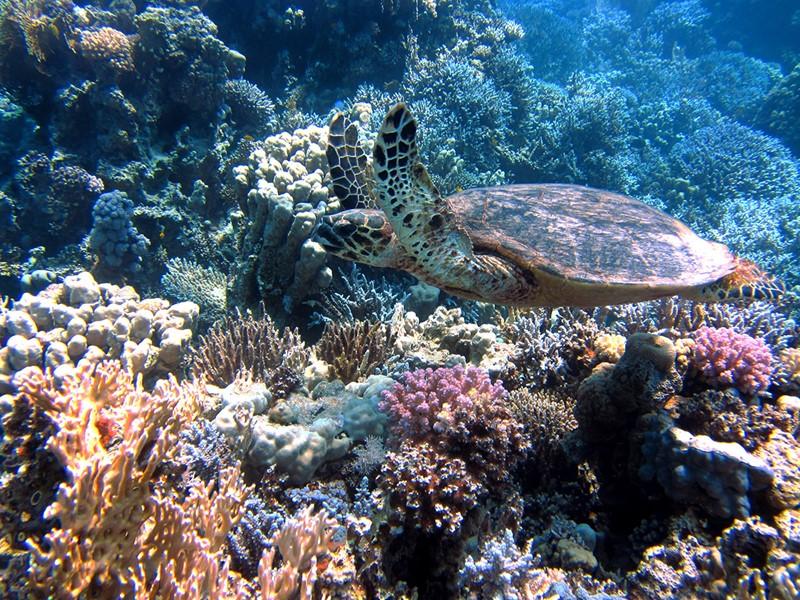 Des fonds marins fascinants à découvrir