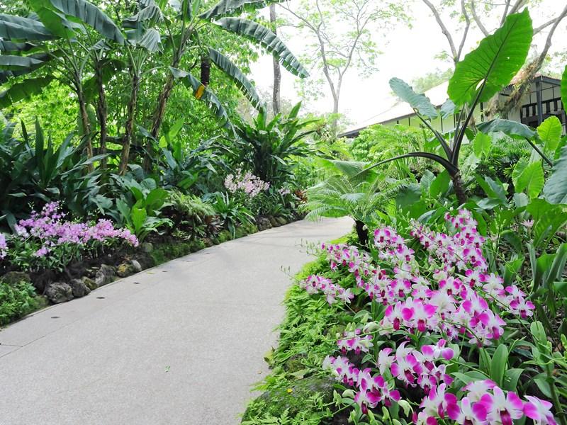 Orchid Garden abrite quelque 60 000 espèces d'orchidées