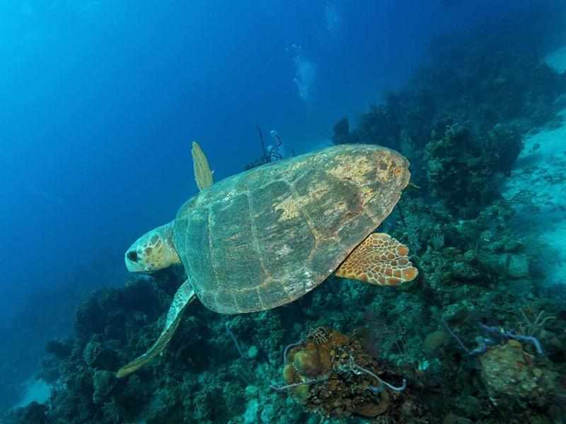 Explorez les fonds marins d'Andros