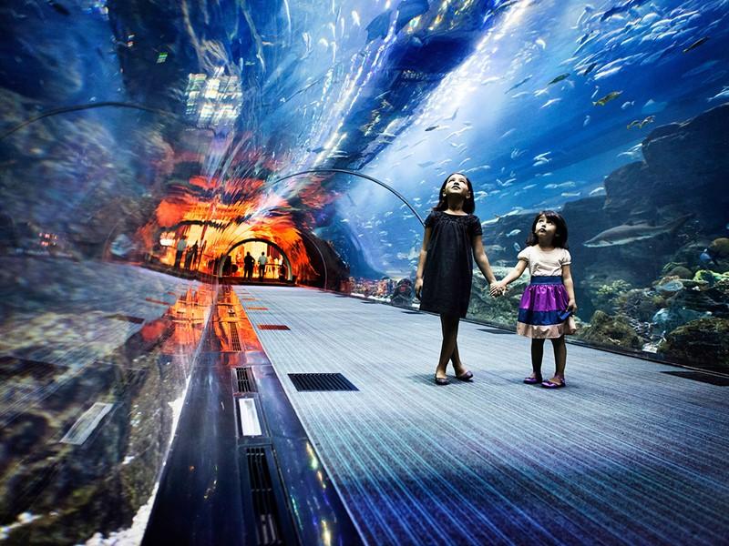 Visite du Atlantis Aquaventure à proximité du Sofitel