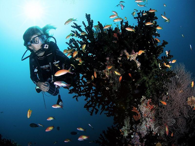 Explorez les fonds marins du Soneva Fushi aux Maldives