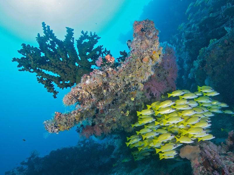 Explorez les fonds marins de l'atoll de Dhaalu