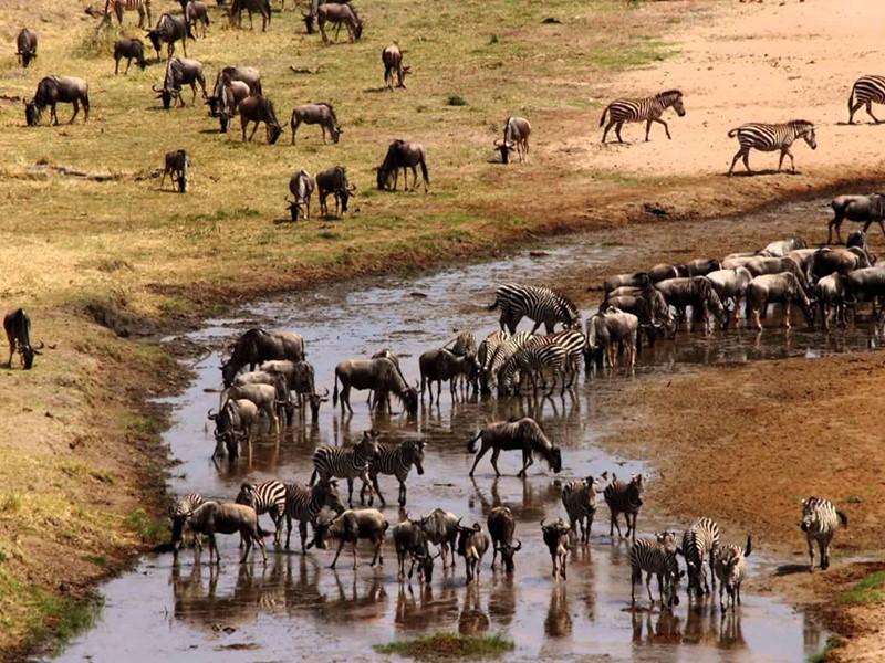 Les animaux du Parc National de Tarangire
