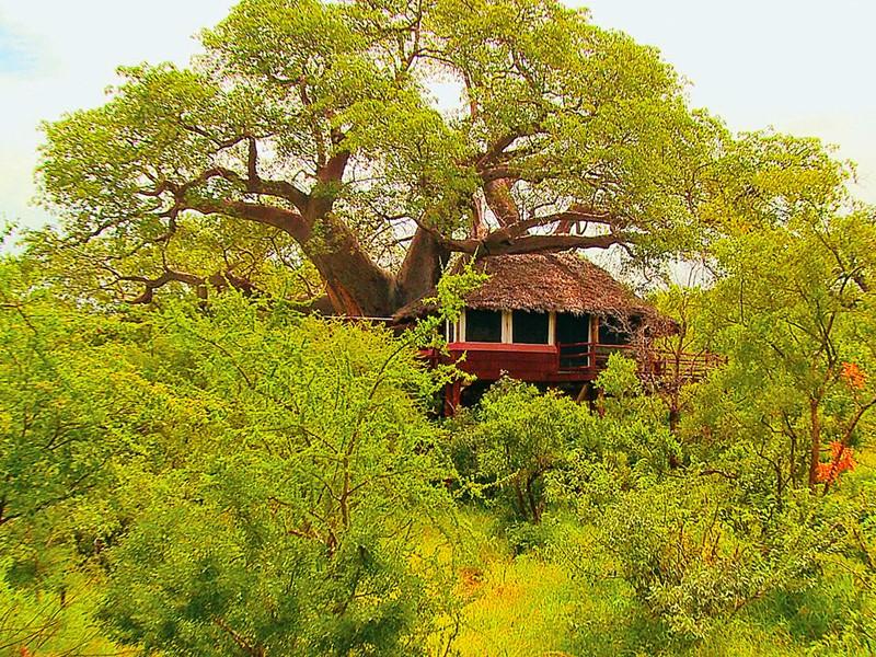 Vue d'une Tree House