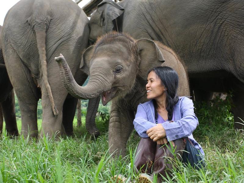 Visite d'un refuge d'éléphants à Chiang Mai