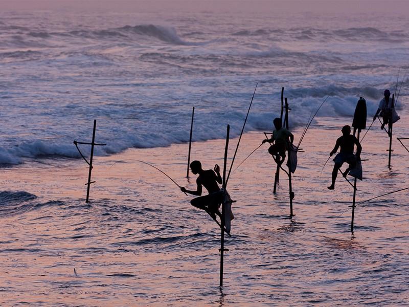 Pêche sur échasse au Sri Lanka