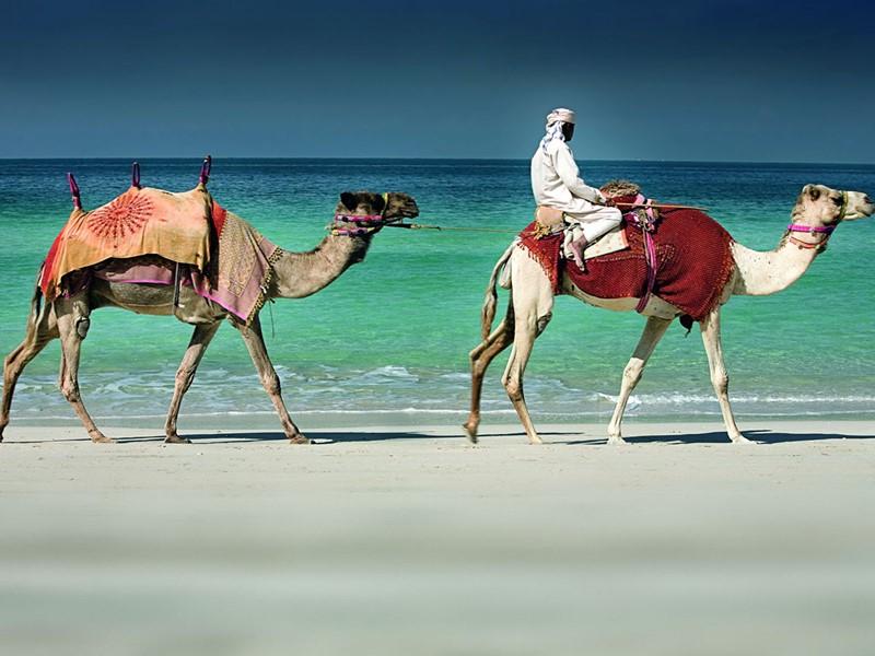 Balade à dos de chameau à l'hôtel Ritz Carlton