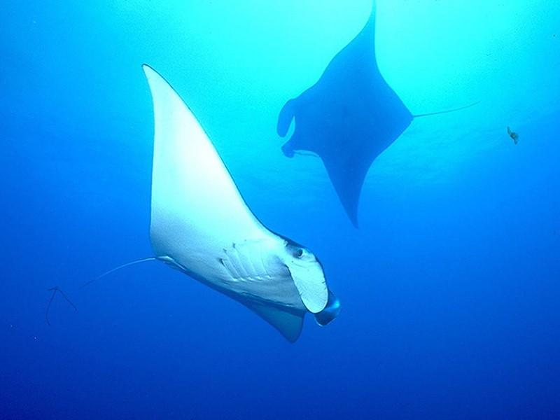 Explorez des spots de plongée fascinants