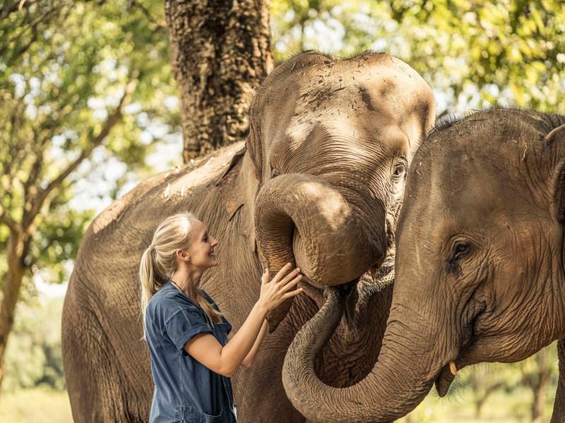Au coeur d'un sanctuaire d'éléphants