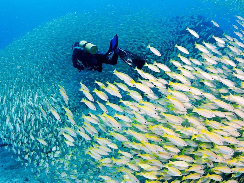 Découvrez les exceptionnels fonds marins de l'île