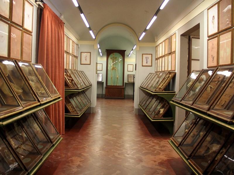 La Specola, un des plus vieux musées d'histoire naturelle du monde