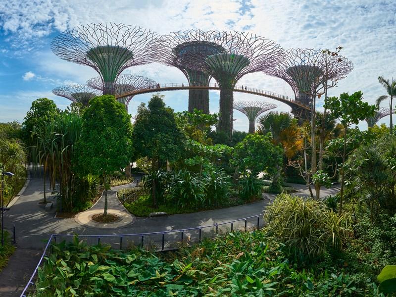 Les joyaux architecturaux et futuristes de Singapour tels que le Supertree Grove