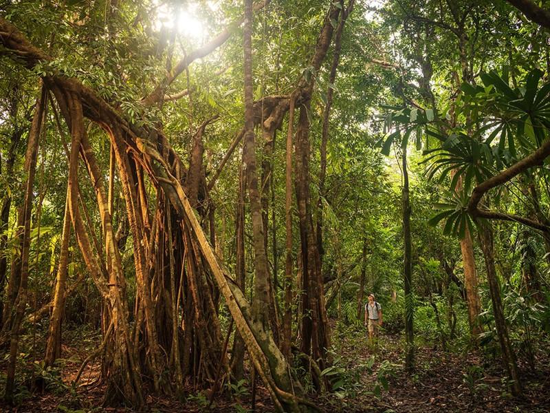 Exploration sur les sentiers forestiers