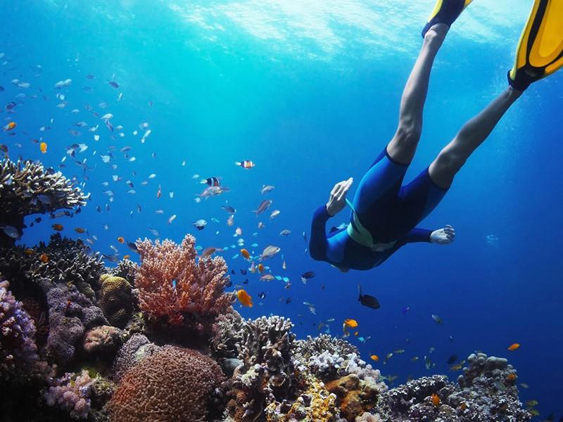 Découvrez les exceptionnels fonds marins des îles Mergui