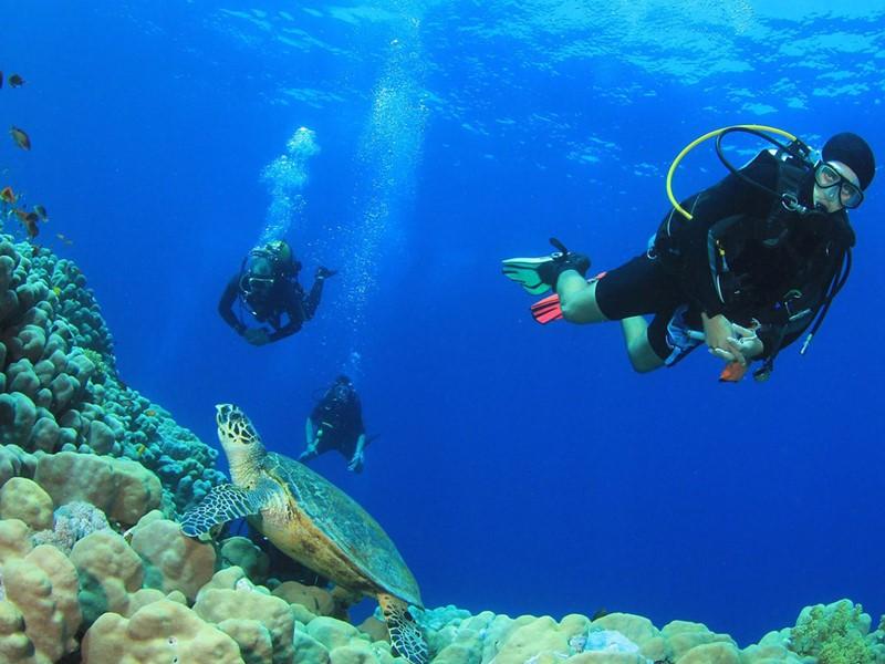 Explorez dans les fonds marins qui entourent le Windjammer Landing