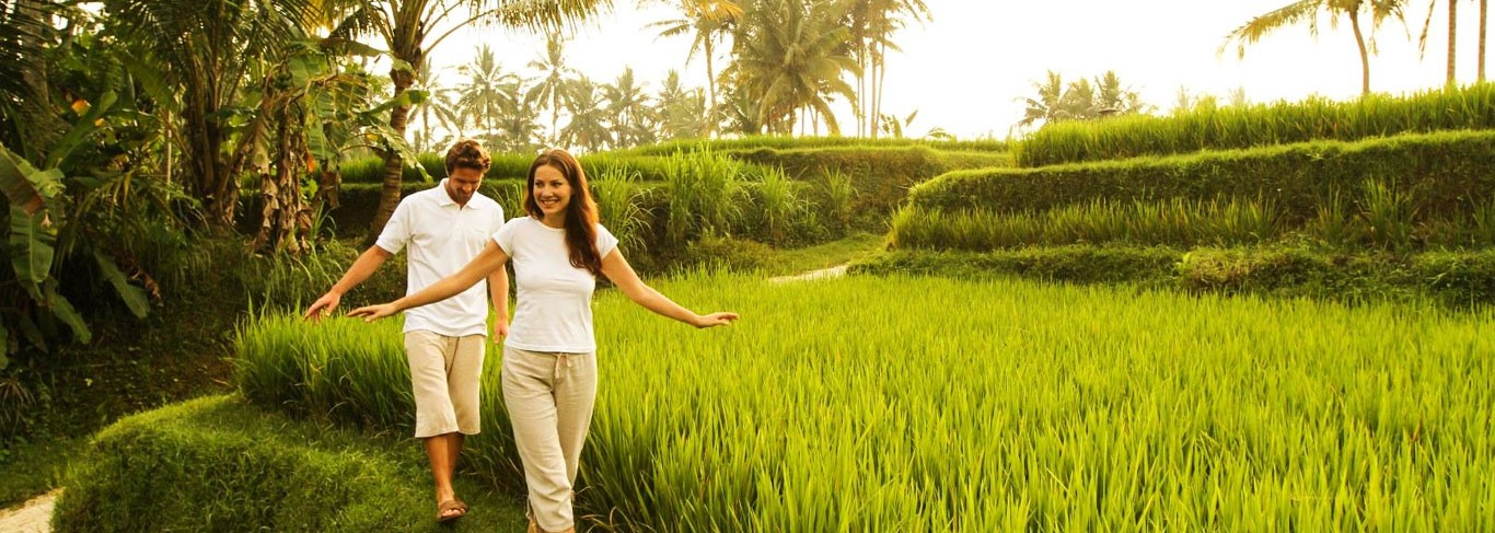 Kamandalu rizières