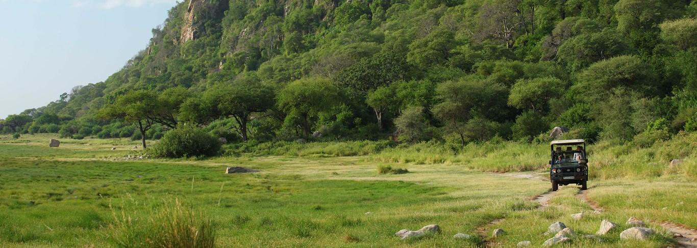 Safari en Tanzanie, savane