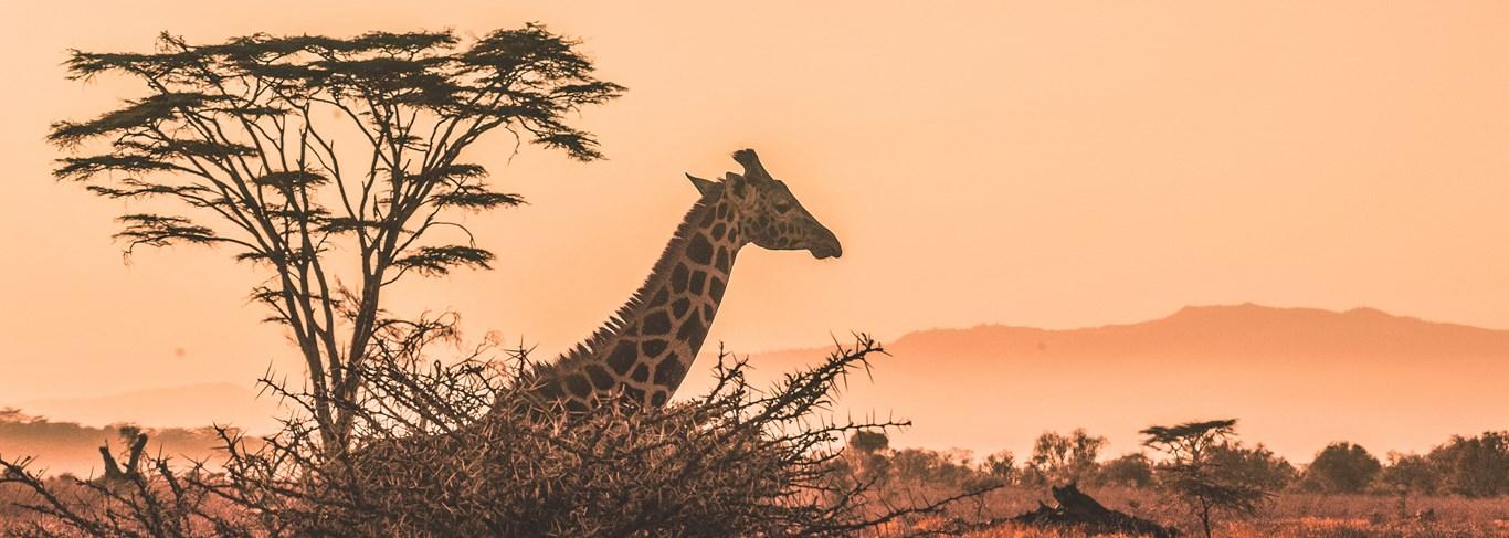 Safari en Tanzanie, réserve animalière