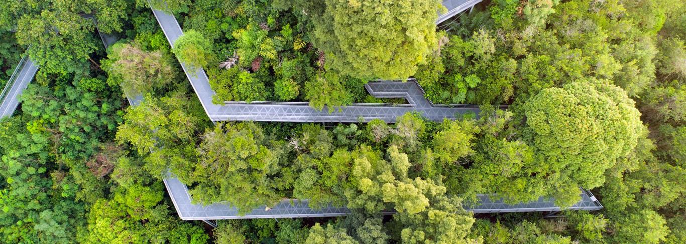 Le Southern Bridges est un endroit idéal pour explorer la nature de Singapour