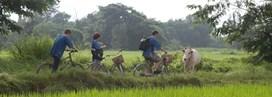 Chiang Mai et le Nord en famille