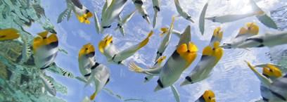 La plongée en Polynésie