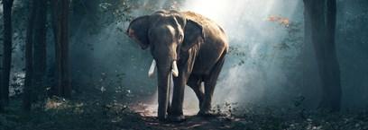 Les refuges pour éléphants en Thaïlande