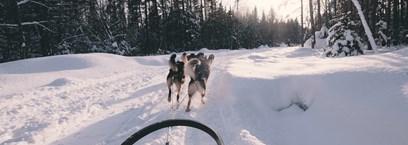 Raid motoneige et traineau à chien au Québec